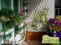 阳台的绿化布置