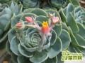 防辐射的花,什么花可以防辐射