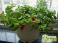防辐射植物,哪些植物防辐射,什么植物防辐射最好