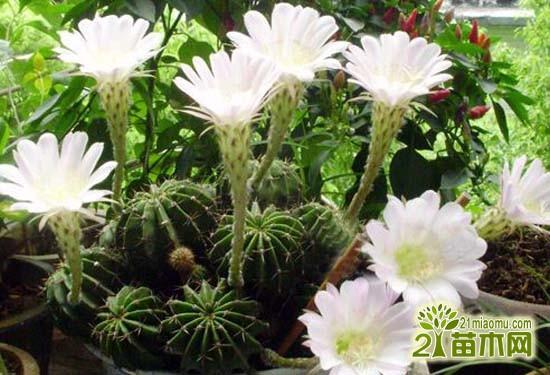 防辐射植物有哪些 什么是最好的防辐射植物