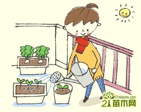 阳台种菜多长时间浇水图片