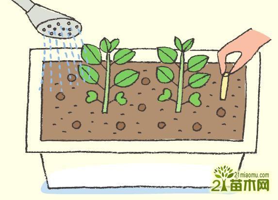 阳台种菜浇水方法图片