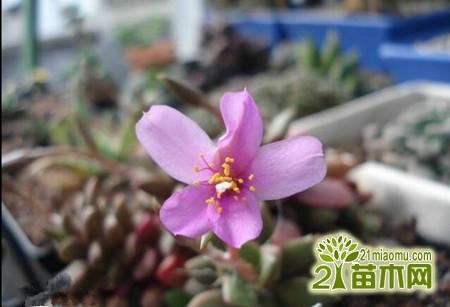 春梦殿锦图片图片