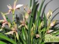 在南方最好养活的兰花品种有哪些