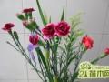 康乃馨切花怎么扦插种植