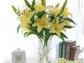 百合花插花瓶里要怎么养护