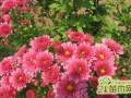新栽花卉苗木成活率低怎么办?新栽花卉养护注意事项