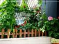 阳台怎么种菜  阳台种菜的技巧方法和注意事项