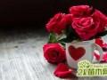 七夕玫瑰花价格  玫瑰花多少钱
