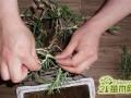 康乃馨怎么土插   康乃馨的土插栽培方法和注意事项