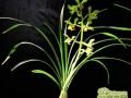兰花怎么上盆   兰花的上盆方法
