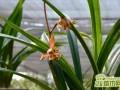 兰花怎么施肥好   兰花专用肥怎么选