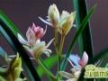 兰花几天浇一次水?兰花的四季浇水方法介绍