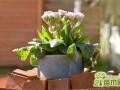 室内花卉养护要注意什么?一点养殖心得分享