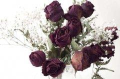 新鲜玫瑰制作干花方法图解