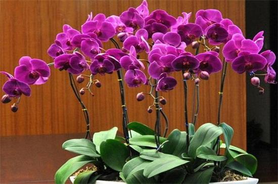 蝴蝶兰用什么土最好?蝴蝶兰一般都是用水苔或者树皮种植