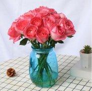 情人节鲜花如何延长花期 插花保鲜养护方法