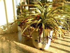 入门级家庭植物养护秘笈 绿植杀手必备养花指南
