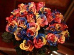 厄瓜多尔玫瑰的花语是什么