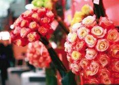 厄瓜多尔玫瑰品种大全