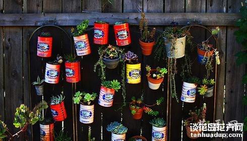 家庭园艺 8种多肉植物美家装饰法
