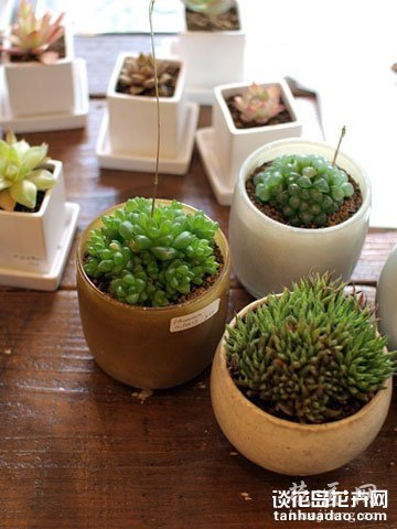 可爱的多肉植物 装扮美好家居生活