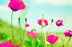 春季家庭养花如何养护 分享六大注意事项