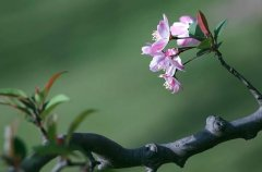 盆栽花卉春分后怎么养护 五大关键要点注意