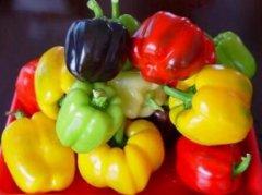 彩色甜椒的品种大全