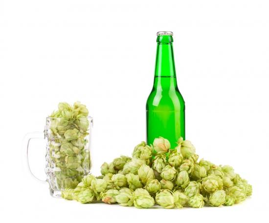 啤酒花食用价值