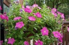 花卉怎么施肥的五大施肥原则须知
