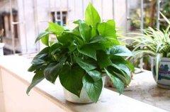 家庭养花把握植物正确浇水时间技巧