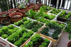 阳台怎么种菜,手把手教你阳台种菜方法