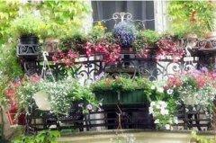 阳台盆花的夏季养护注意事项