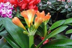 花卉换盆后花都蔫了怎么养护