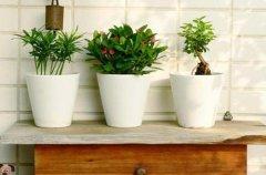 夏季花卉植物防暑降温养护方法