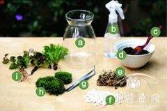 苔藓微景观制作方法教程