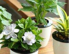 网购盆栽花卉什么季节最合适?需要注意哪些问题