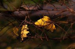 秋天养花要注意什么