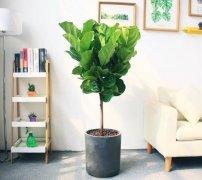 客厅里摆放什么植物好