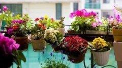 说说冬天养花的几个注意事项 别把花冻死了