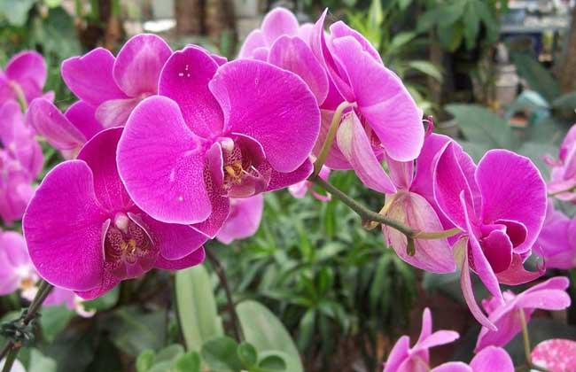 蝴蝶兰用什么土栽培