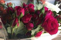 购买的鲜花要醒花多久 鲜花的正确养护方法