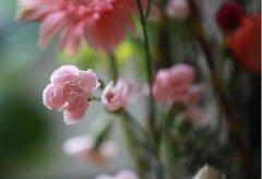 室内观叶花木常用的4种修剪方法