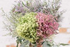 水晶草怎么养护 干花需要浇水吗