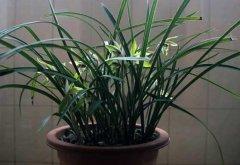 兰花用什么土种植好 培养土配制方案
