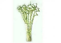 转运竹水培的日常养护方法
